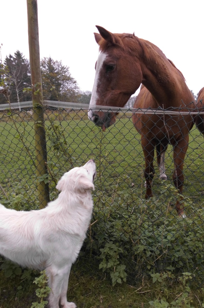 Giada-Pferde-14.10.2017-c